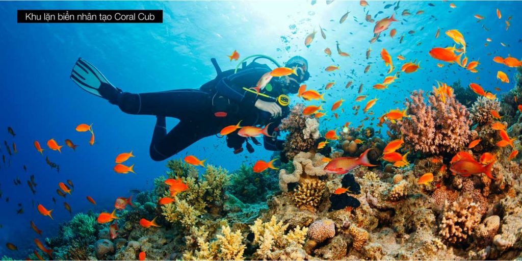 Khu lặn biển nhân tạo Coral Cub